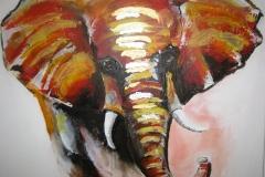 Elefant 60 X 60