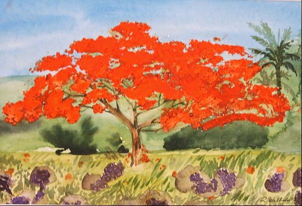 Feuerbaum 32 x 24 Aquarell