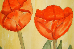 Tulpen in Rot 38  x 26 Aquarell