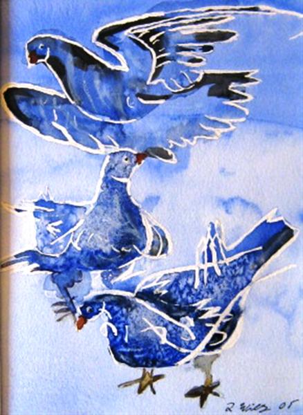 Friedestaube 28  x 22 Aquarell